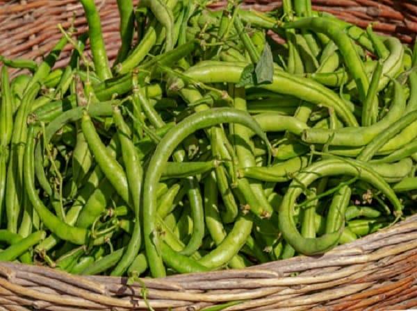в каких овощах больше всего белка, бобы
