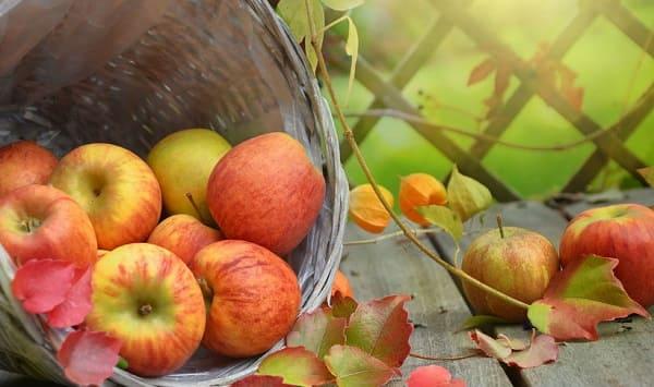 Энергетическая калорийность продуктов, фруктов