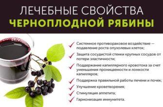 Черноплодная рябина: лечебные свойства, рецепты, применение