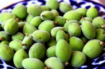 Зеленый урюк (13 фото): в чем польза недозрелого плода с солью, варенье из неспелых плодов